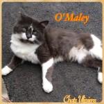 Omaley03